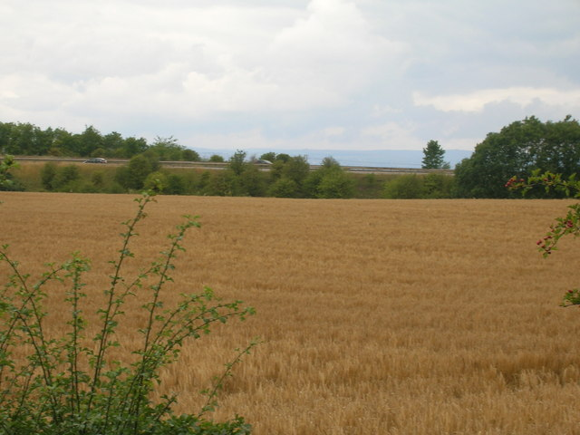 Farmland off Common Lane
