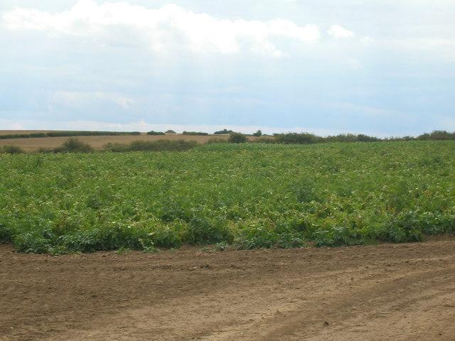 Farmland off East Field Lane