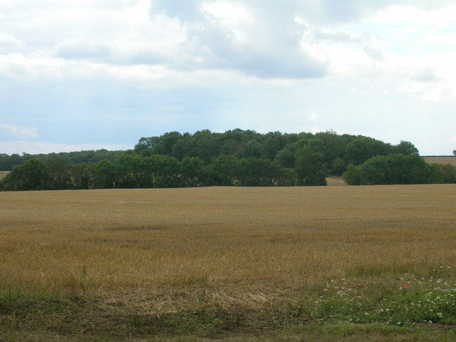 Farmland south off King's Wood