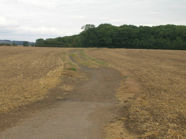 Farm track towards Stubbing's Wood