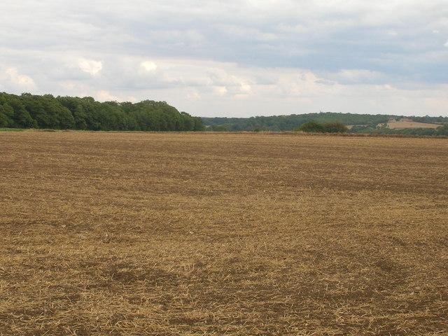 Farmland near Stubbing's Wood