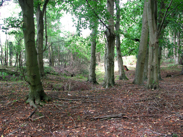 Woodland's edge by Minsmere Road