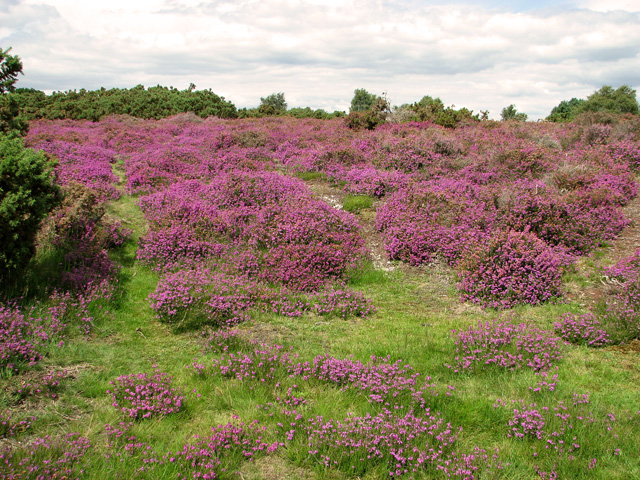 Westleton Heath National Nature Reserve