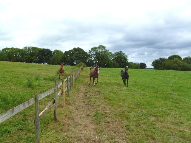 Gaunt's Common, horses