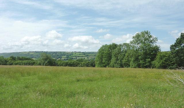 Pasture east of  Capel Betws Lleucu, Ceredigion