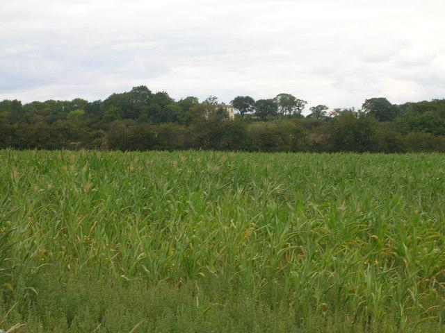 Farmland off Limekiln Lane