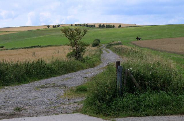 2011 : Farm track near West Hill Farm