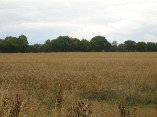 Farmland of Hirst Lane