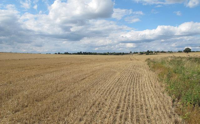 Arable field near Nether Hall