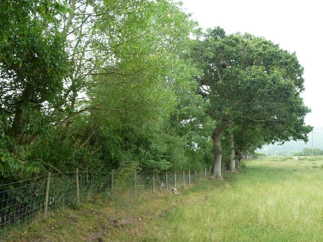 Trees along the field boundary