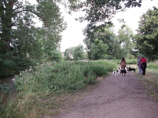 Dog walkers on the London Loop