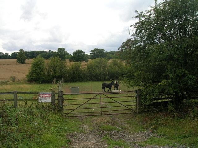 Field entrance off White Cross Lane