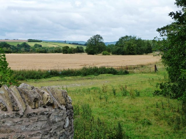 Wheatfield in the Teme valley
