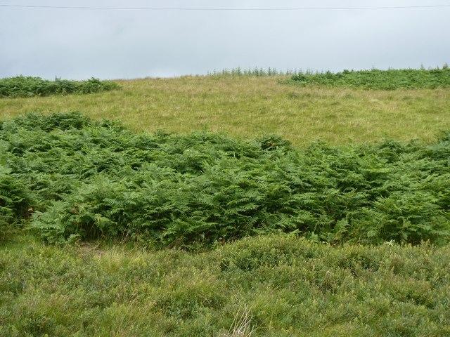 Bracken, grass and scrub rough grazing looking towards Tom nan Cùbairean
