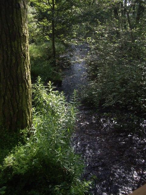 Downstream Burn of Cattie