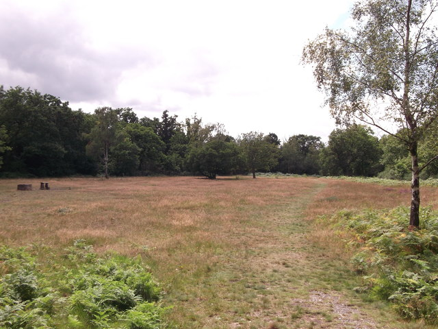 Heathland in Chislehurst Common