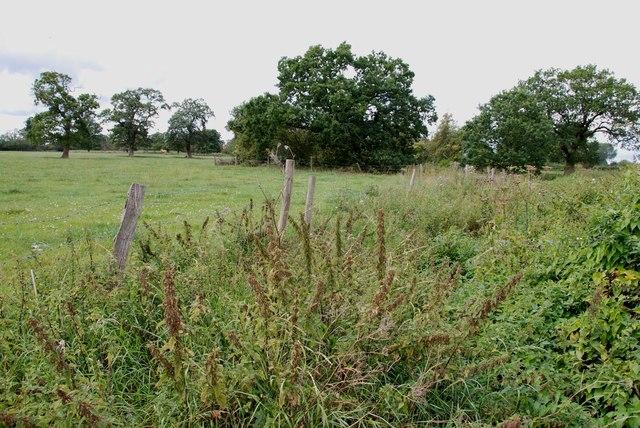 Overgrown Ditch and Pastureland