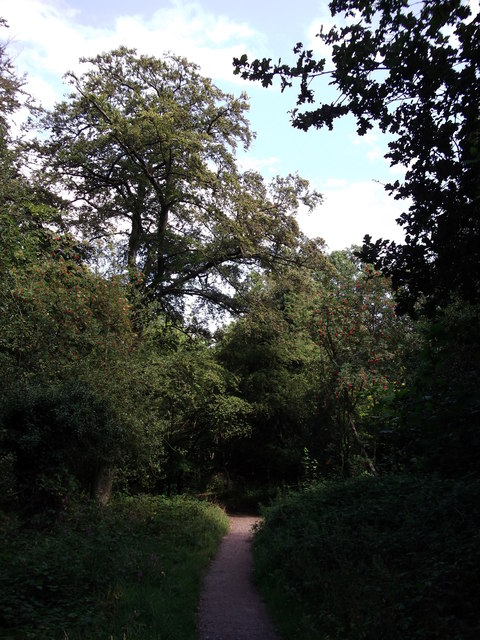Path in Chislehurst Common
