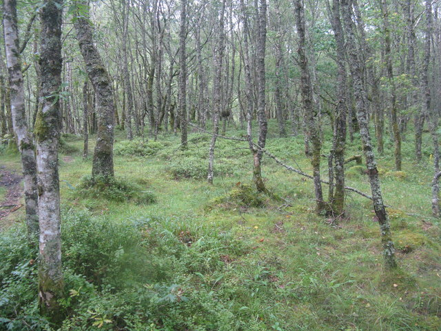 Birch woodland in the Pass of Leny