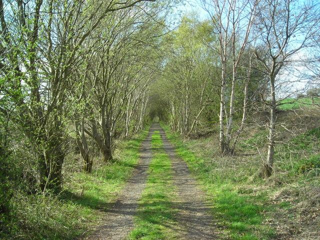 Former railway track (in spring)