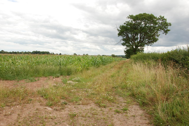 Field of Sweetcorn, Track and Hedge