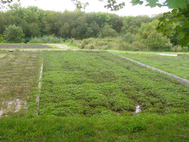 Watercress Beds, Old Alresford