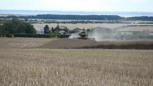 Oilseed rape harvest