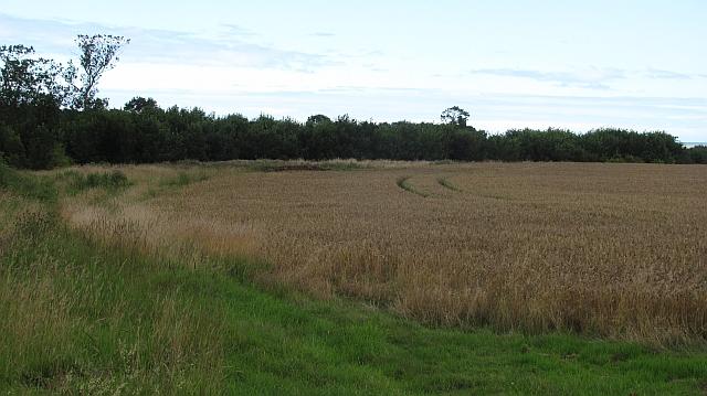 Wheat by Kettleburn