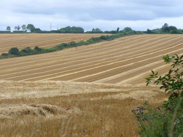 Cereal Farming by Bighton