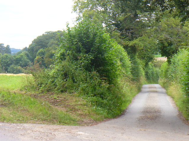 Country Lane by Bighton