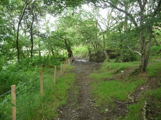 Track near Gilfachydwn Fawr