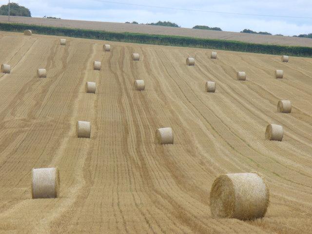 Harvest at Gundleton