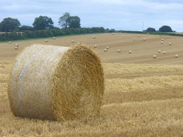 Straw Bale, Gundleton