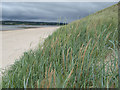 G8974 : Dunes with Marram Grass by Jonathan Wilkins