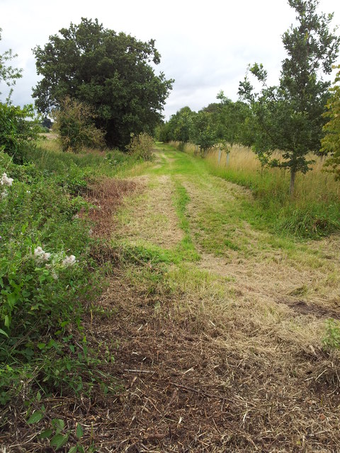 Cut path beside drainage ditch