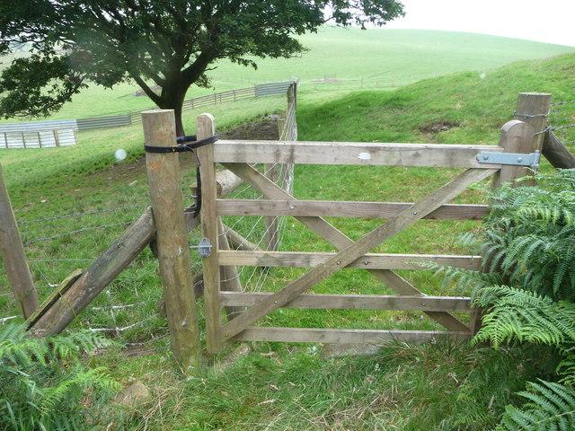 Gate secured with a leather belt near Bryneithinog