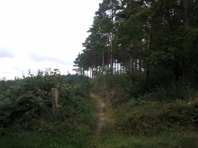 Footpath from the road to Mamhead Bottom