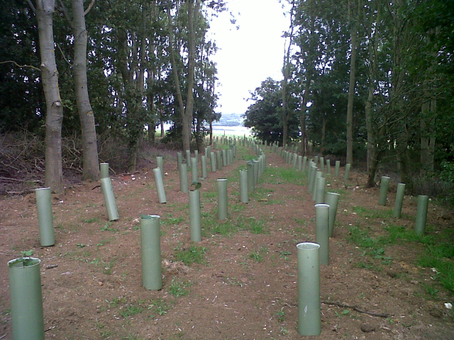 New planting near Rutland Water