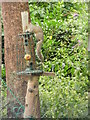 SJ3681 : Grey squirrel on a bird feeder by Eirian Evans