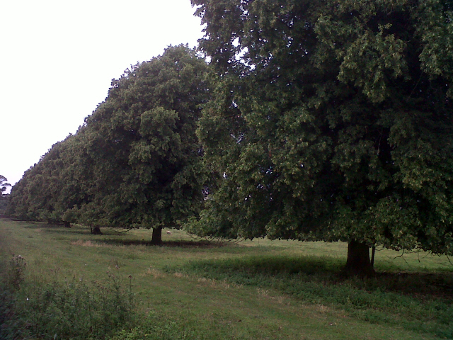 Trees alongside a minor road