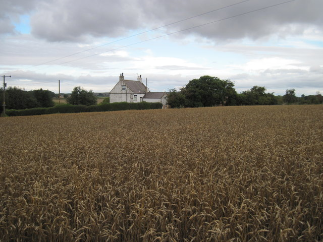 Hollins  Farm  over  Wheat