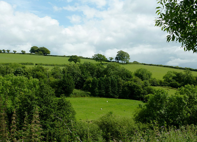 Farmland south of  Llwyn-y-Groes, Ceredigion