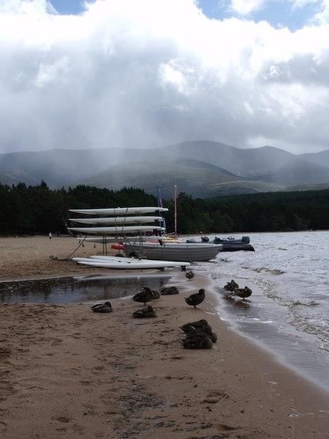 Ducks and windsurf boards, Loch Morlich