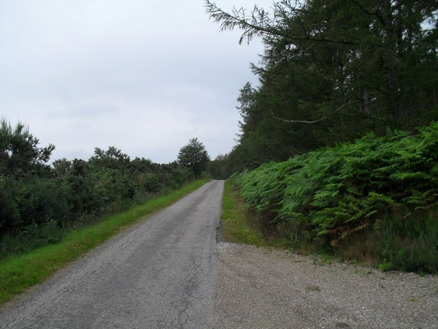 Minor road by Skelbo woods