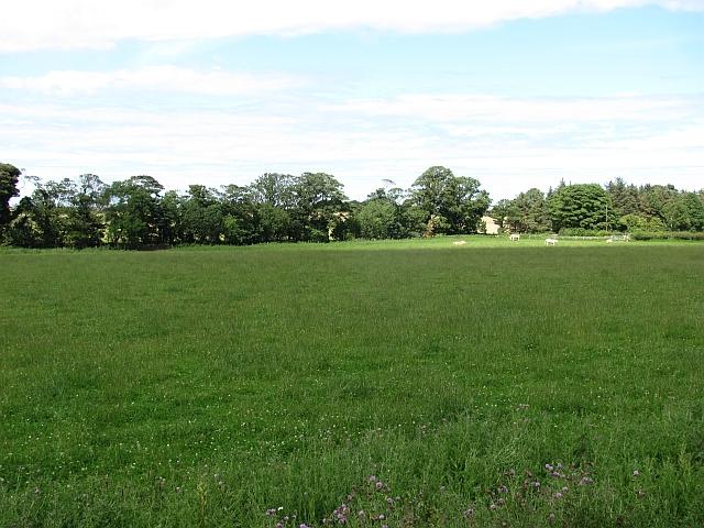 Grass, Cragmill