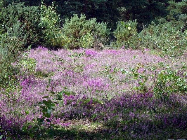 Copythorne Common