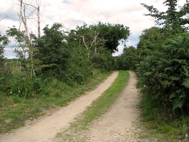 Farm track skirting Leiston Common