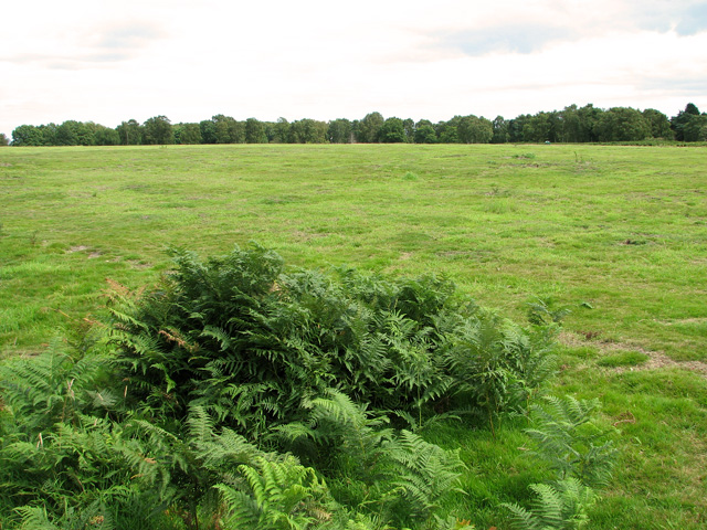 View across pasture on Leiston Common
