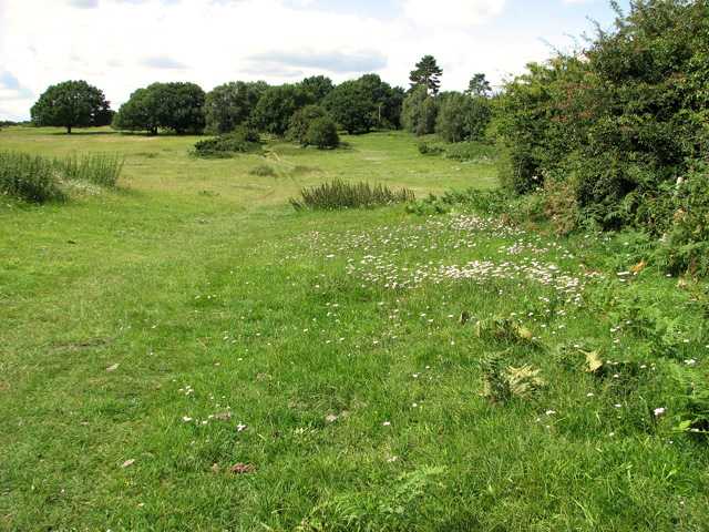 Track past Broom Covert, Leiston