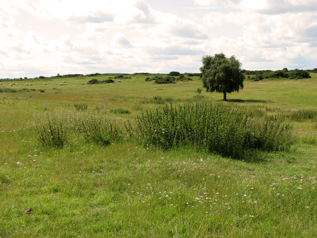 Large sheep pasture by Broom Covert, Leiston